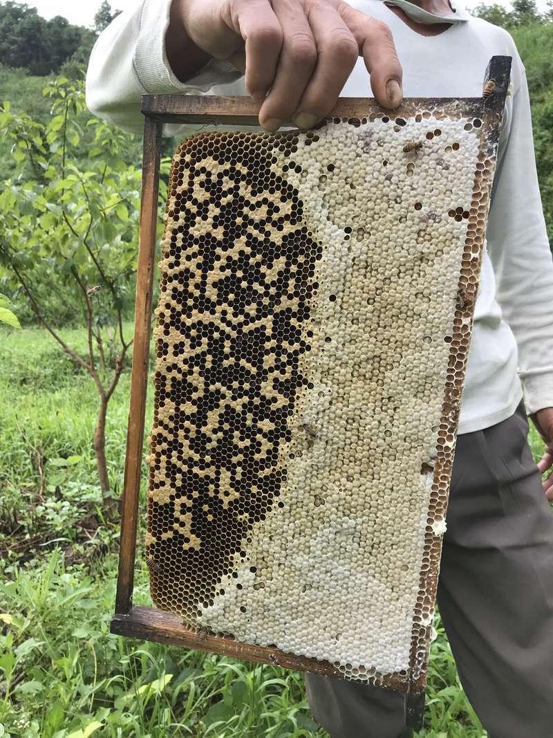 关于我,土蜂蜜的好处的作者