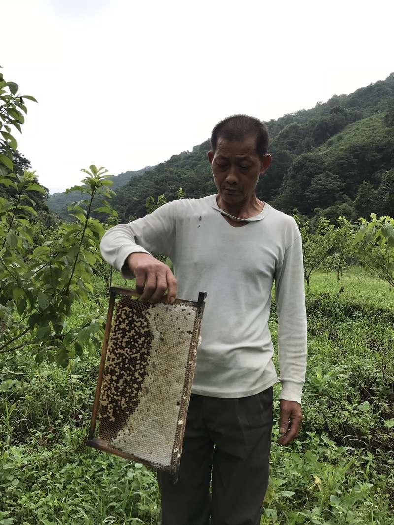 关于土蜜蜂
