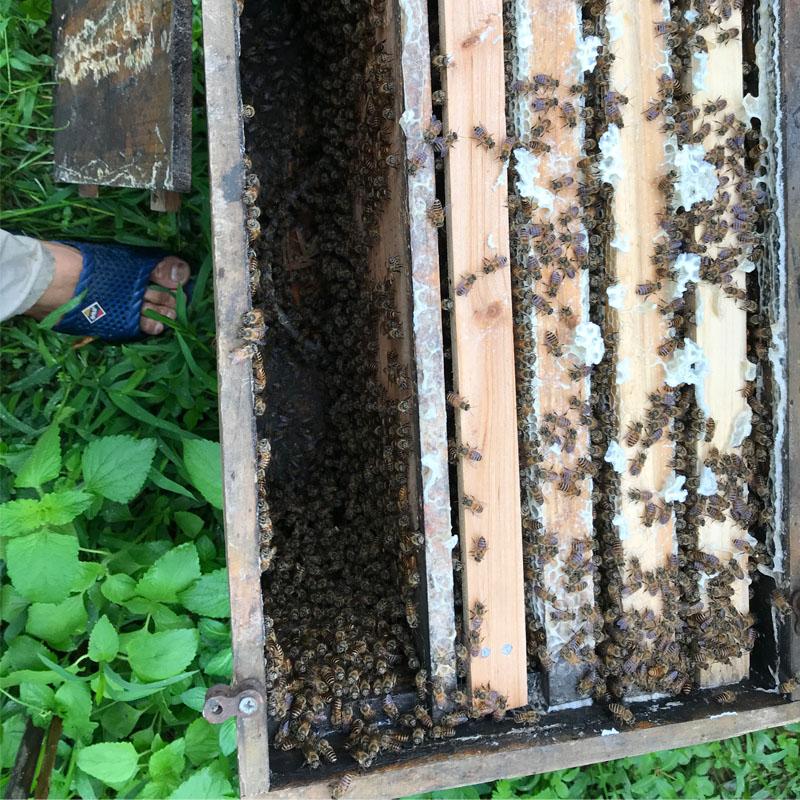 20个精彩蜜蜂事实(#8令人惊讶)