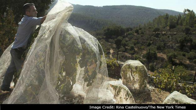 以色列打破了葡萄酒产业的新局面